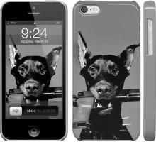 Чехол Доберман для iPhone 5c
